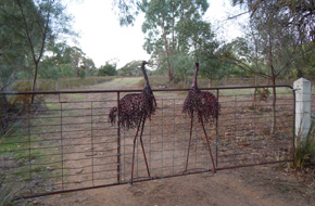 Emu gate - Grampians National Park